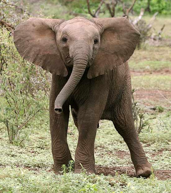 Baby elephant pose