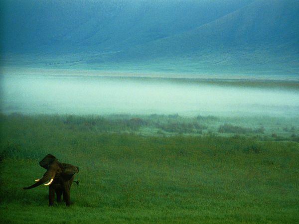 African-elephant-tanzania_3648_600x450
